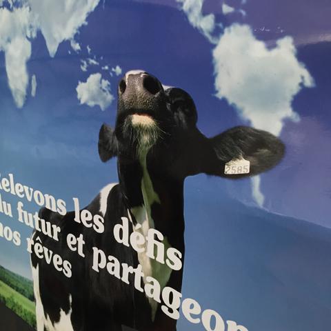 Affiche interne réalisée pour Alsace Lait pour leur projet d'entreprise